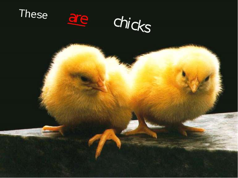 These are chicks