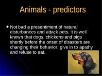 Not bad a presentiment of natural disturbances and attack pets. It is well kn...