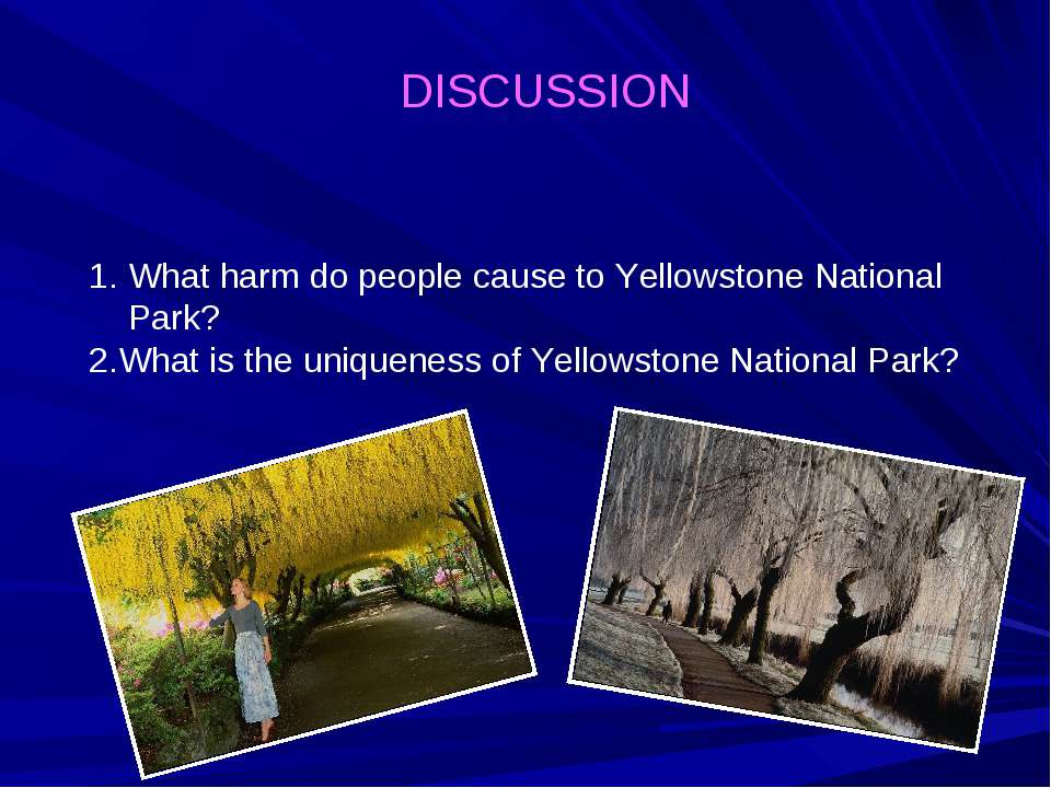 DISCUSSION What harm do people cause to Yellowstone National Park? 2.What is ...