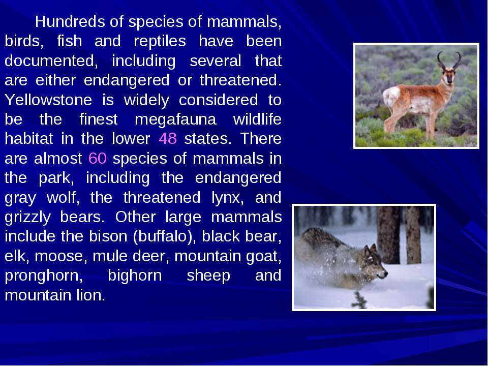 Hundreds of species of mammals, birds, fish and reptiles have been documented...
