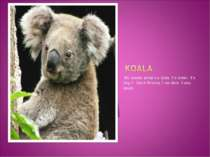 My favorite animal`s a koala . It`s brown. It`s long. It lives in America. It...
