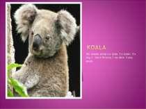 My favorite animal`s a koala . It`s brown. It`s long. It lives in America. It...