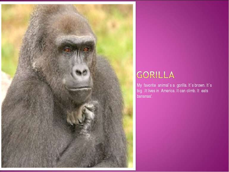 My favorite animal`s a gorilla. It`s brown. It`s big. .It lives in America. I...