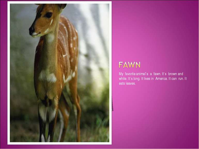 My favorite animal`s a fawn. It`s brown and white. It`s long. It lives in Ame...