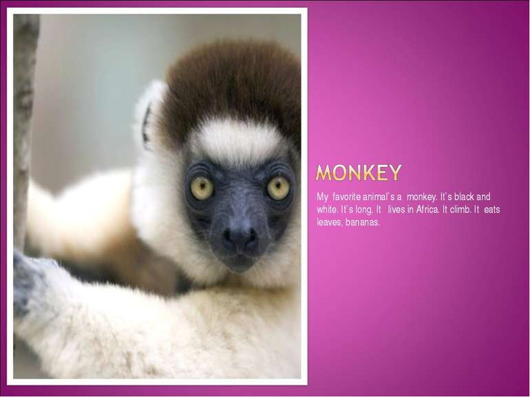 My favorite animal`s a monkey. It`s black and white. It`s long. It lives in A...