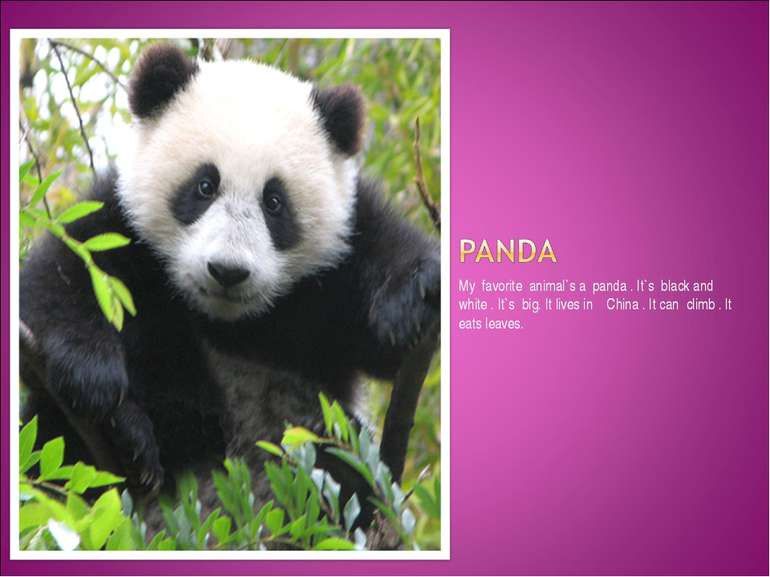 My favorite animal`s a panda . It`s black and white . It`s big. It lives in C...