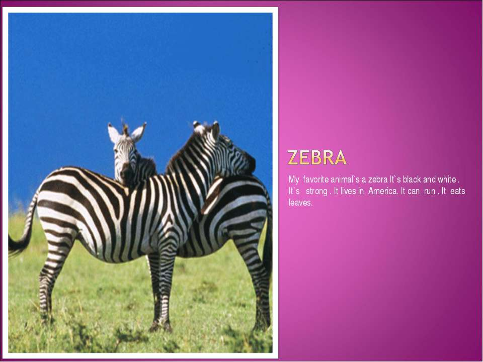 My favorite animal`s a zebra It`s black and white . It`s strong . It lives in...