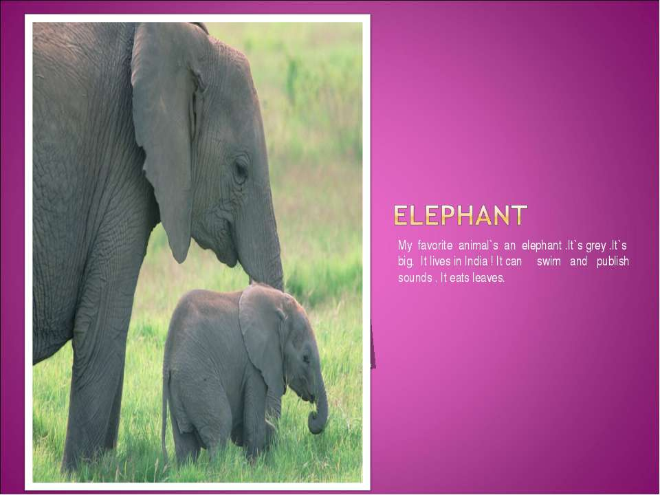 My favorite animal`s an elephant .It`s grey .It`s big. It lives in India ! It...