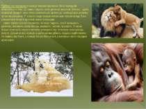 Турбота про потомство у ссавців яскраво виражена. Вона передусім виявляється ...