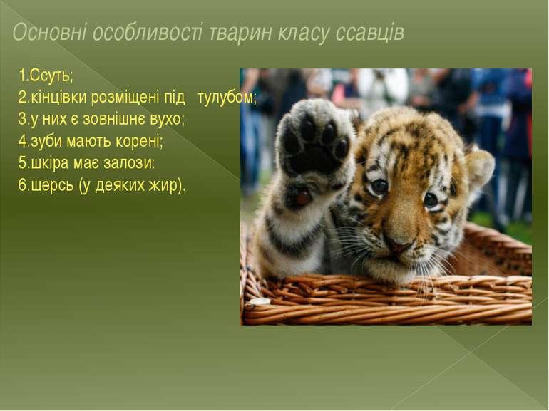 Основні особливості тварин класу ссавців 1.Ссуть; 2.кінцівки розміщені під ту...