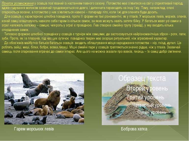 Початок розмноження у ссавців пов'язаний із настанням певного сезону. Потомст...