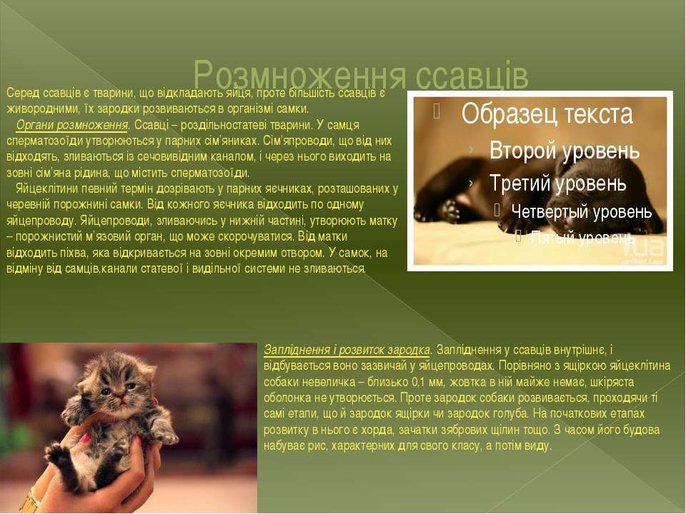 Розмноження ссавців Серед ссавців є тварини, що відкладають яйця, проте більш...