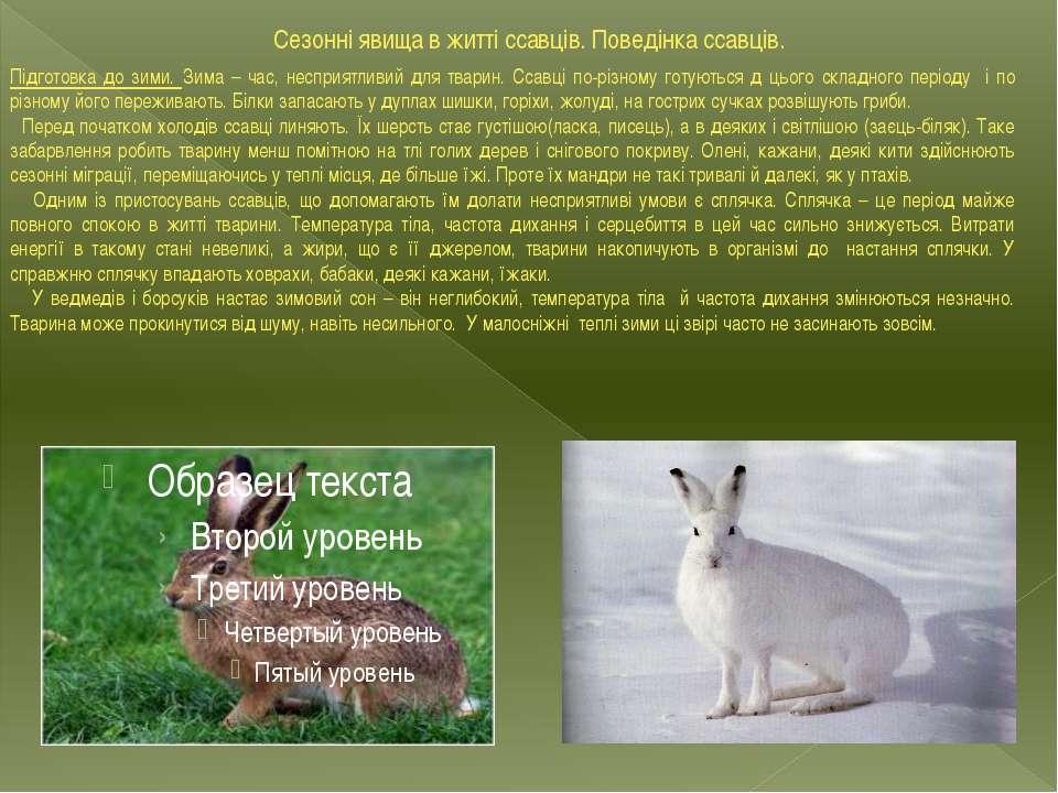 Сезонні явища в житті ссавців. Поведінка ссавців. Підготовка до зими. Зима – ...
