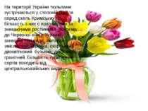 На території України тюльпани зустрічаються у степовій зоні та серед скель Кр...