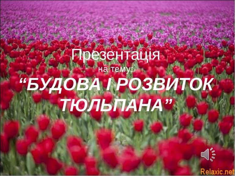 """Презентація на тему: """"БУДОВА І РОЗВИТОК ТЮЛЬПАНА"""""""