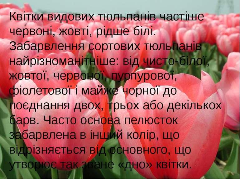 Квітки видових тюльпанів частіше червоні, жовті, рідше білі. Забарвлення сорт...