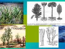 Риніофіти(судинні рослини) Псилофіти