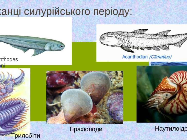 Мешканці силурійського періоду: Acanthodes bronni Трилобіти Наутилоідеї Брахі...