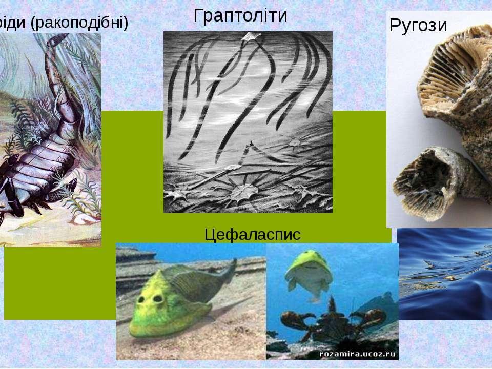 Евриптеріди (ракоподібні) Ругози Граптоліти Цефаласпис