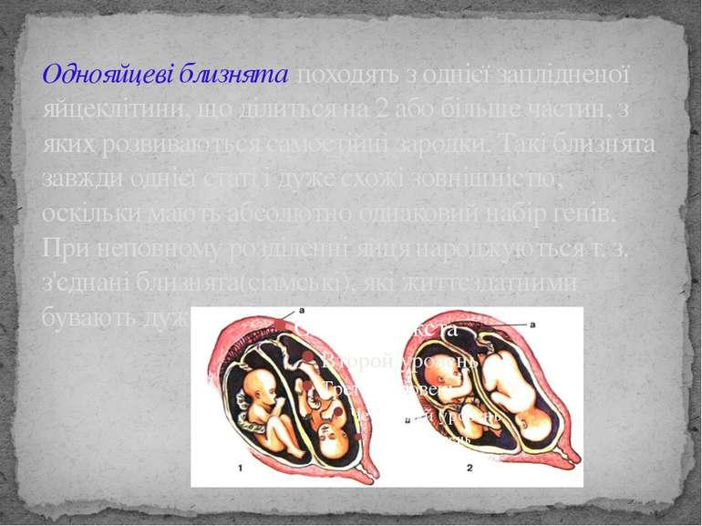 Однояйцеві близнята походять з однієї заплідненої яйцеклітини, що ділиться на...