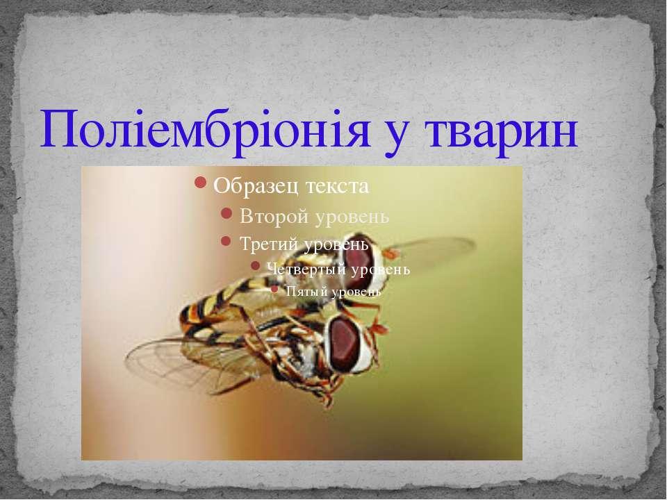 Поліембріонія у тварин