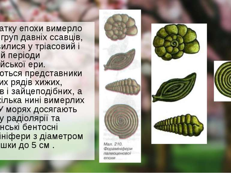 На початку епохи вимерло багато груп давніх ссавців, що з'явилися у тріасовий...