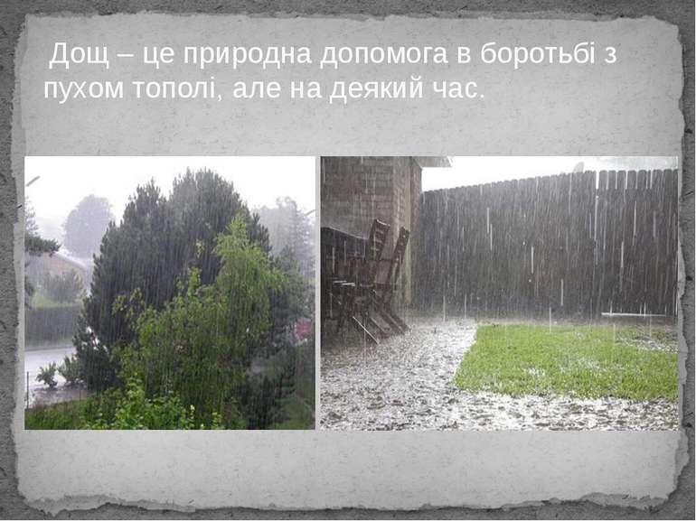 Дощ – це природна допомога в боротьбі з пухом тополі, але на деякий час.