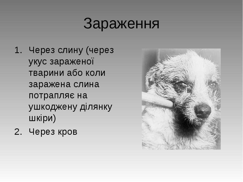 Зараження Через слину (через укус зараженої тварини або коли заражена слина п...