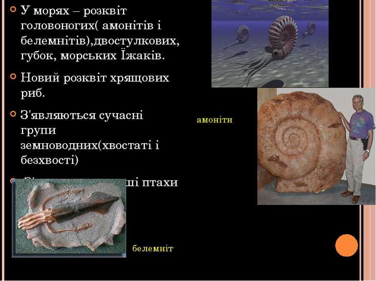 У морях – розквіт головоногих( амонітів і белемнітів),двостулкових, губок, мо...