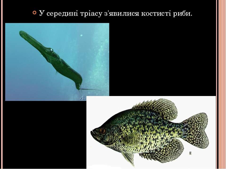 У середині тріасу з'явилися костисті риби.