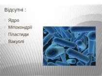 Відсутні : Ядро Мітохондрії Пластиди Вакуолі