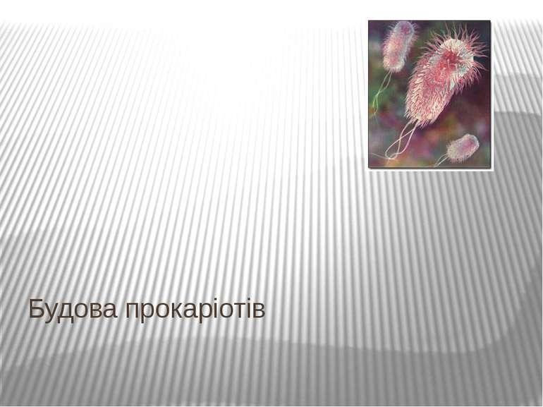 Будова прокаріотів