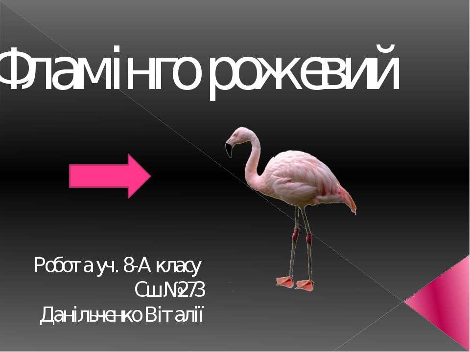 Фламiнго рожевий Робота уч. 8-А класу Сш №273 Данiльченко Вiталiї
