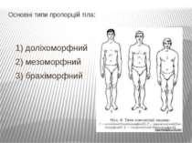 Основні типи пропорцій тіла: 1) доліхоморфний 2) мезоморфний 3) брахіморфний