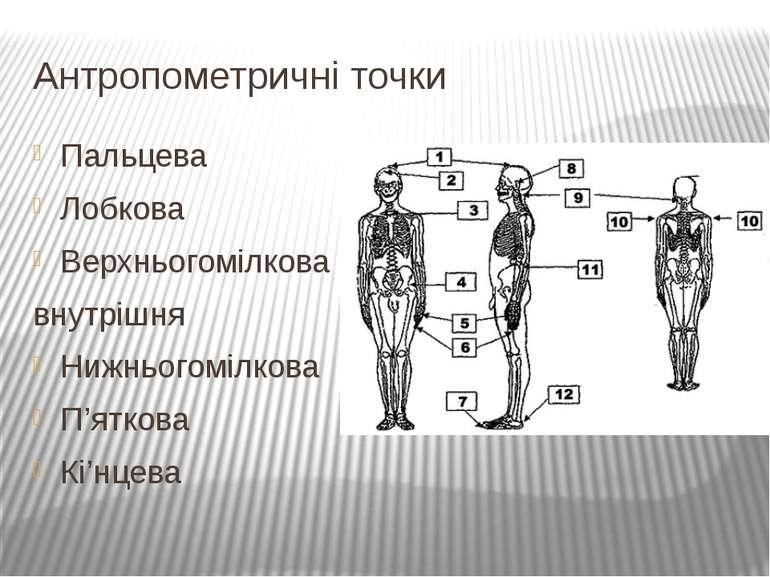 Антропометричні точки Пальцева Лобкова Верхньогомілкова внутрішня Нижньогоміл...