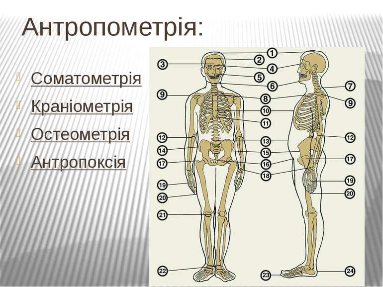 Антропометрія: Соматометрія Краніометрія Остеометрія Антропоксія