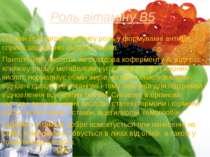 Роль вітаміну В5 Вітамін В5 відіграє важливу роль у формуванні антитіл, сприя...