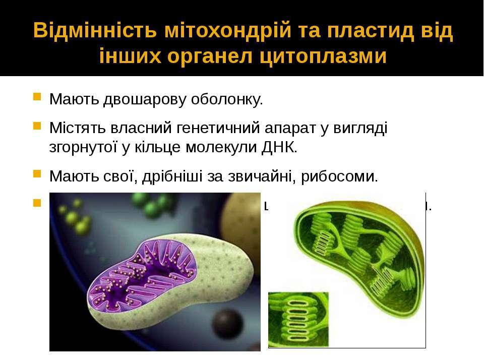 Відмінність мітохондрій та пластид від інших органел цитоплазми Мають двошаро...