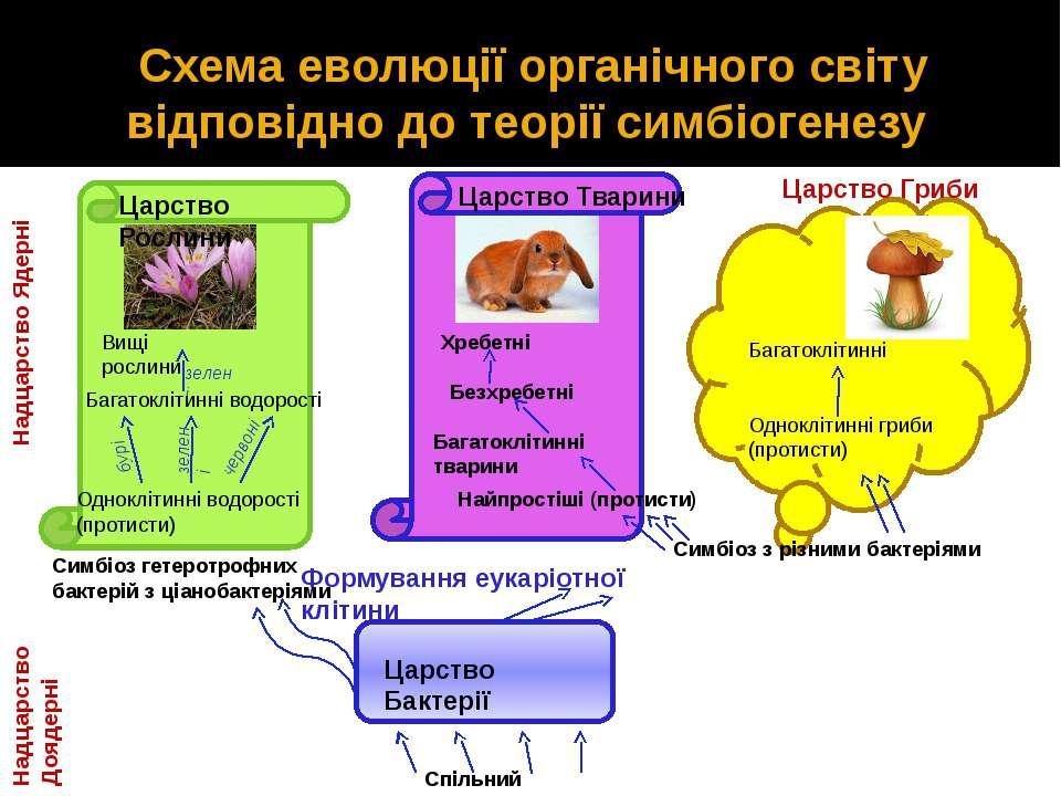 Схема еволюції органічного світу відповідно до теорії симбіогенезу Царство Ба...