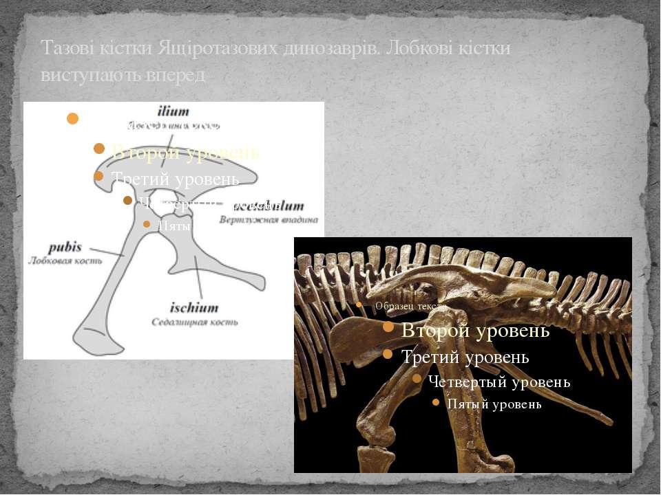 Тазові кістки Ящіротазових динозаврів. Лобкові кістки виступають вперед