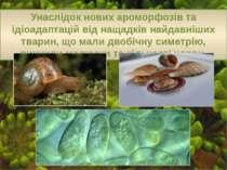Унаслідок нових ароморфозів та ідіоадаптацій від нащадків найдавніших тварин,...