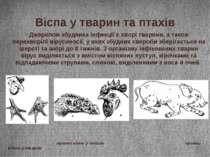 Віспа у тварин та птахів Джерелом збудника інфекції є хворі тварини, а також ...