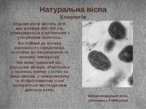 Натуральна віспа Етнологія Збудник віспи містить ДНК, має розміри 200–350нм,...