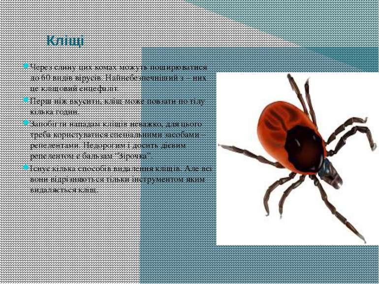 Кліщі Через слину цих комах можуть поширюватися до 60 видів вірусів. Найнебез...