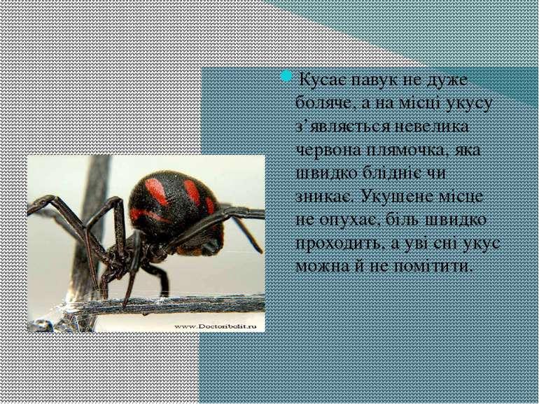 Кусає павук не дуже боляче, а на місці укусу з'являється невелика червона пля...