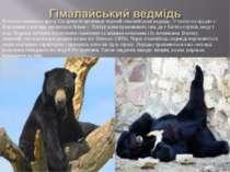 В межах нижнього ярусу Сагарматхі проживає чорний гімалайський ведмідь. У ньо...