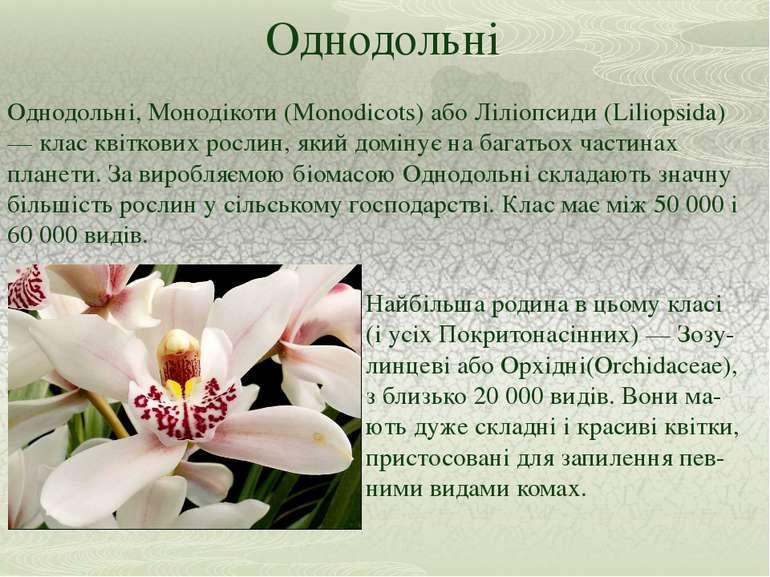 Однодольні Однодольні, Монодікоти (Monodicots) або Ліліопсиди (Liliopsida) — ...