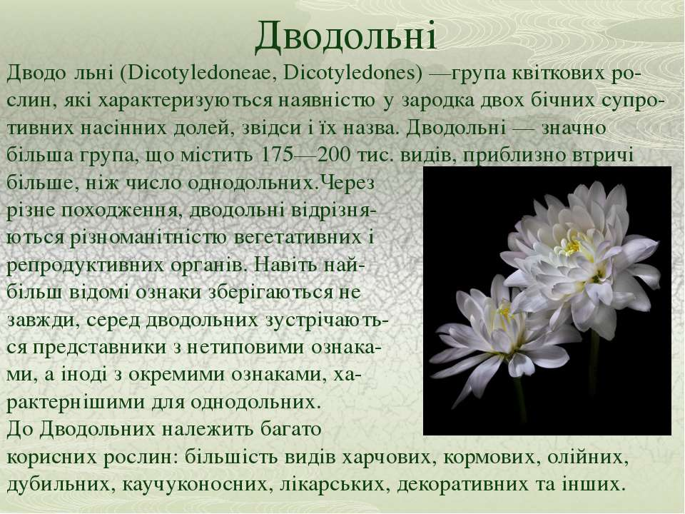 Дводольні Дводо льні (Dicotyledoneae, Dicotyledones) —група квіткових ро-слин...