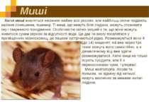 Миші Хатні миші живляться насінням майже всіх рослин, але найбільш охоче поїд...