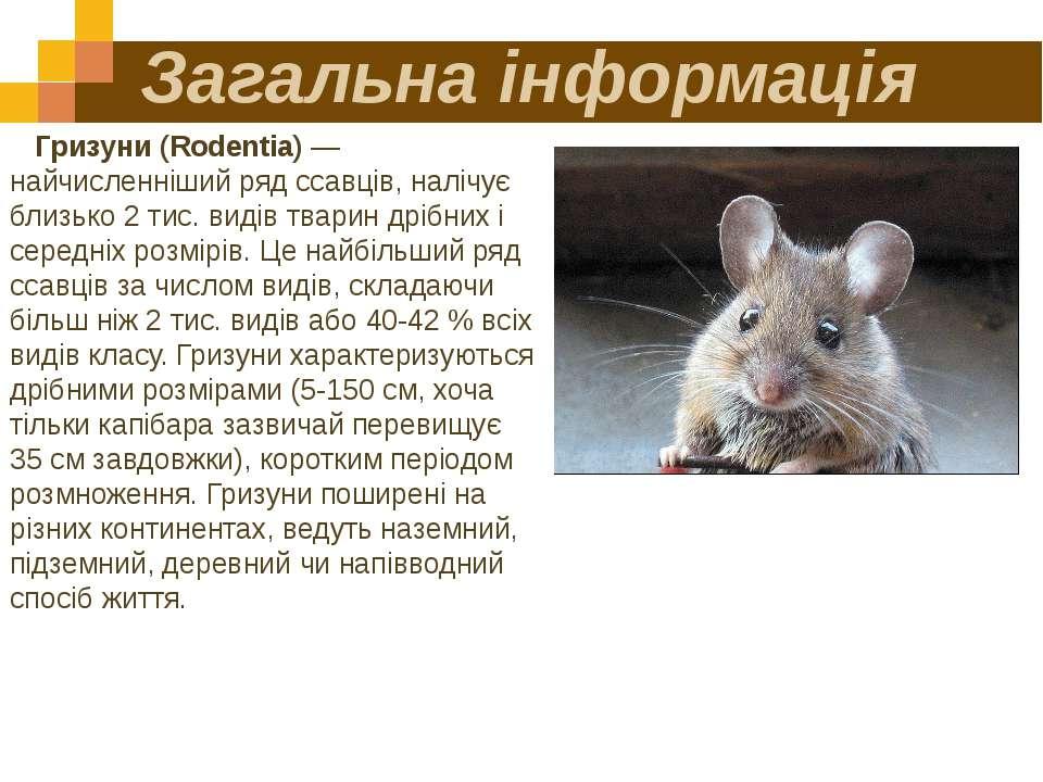 Загальна інформація Гризуни (Rodentia) — найчисленніший ряд ссавців, налічує ...